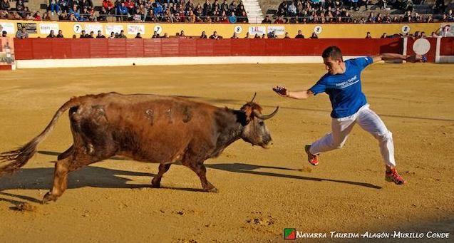 Navarra Taurina